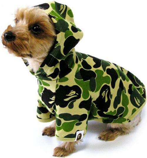 Ropa Hip Hop BAPE para perros